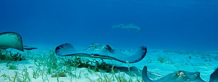 Undersea Fun on Grand Cayman - Scuba & Watersports