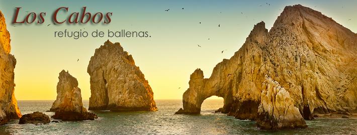 Los Cabos Refugio de Ballenas